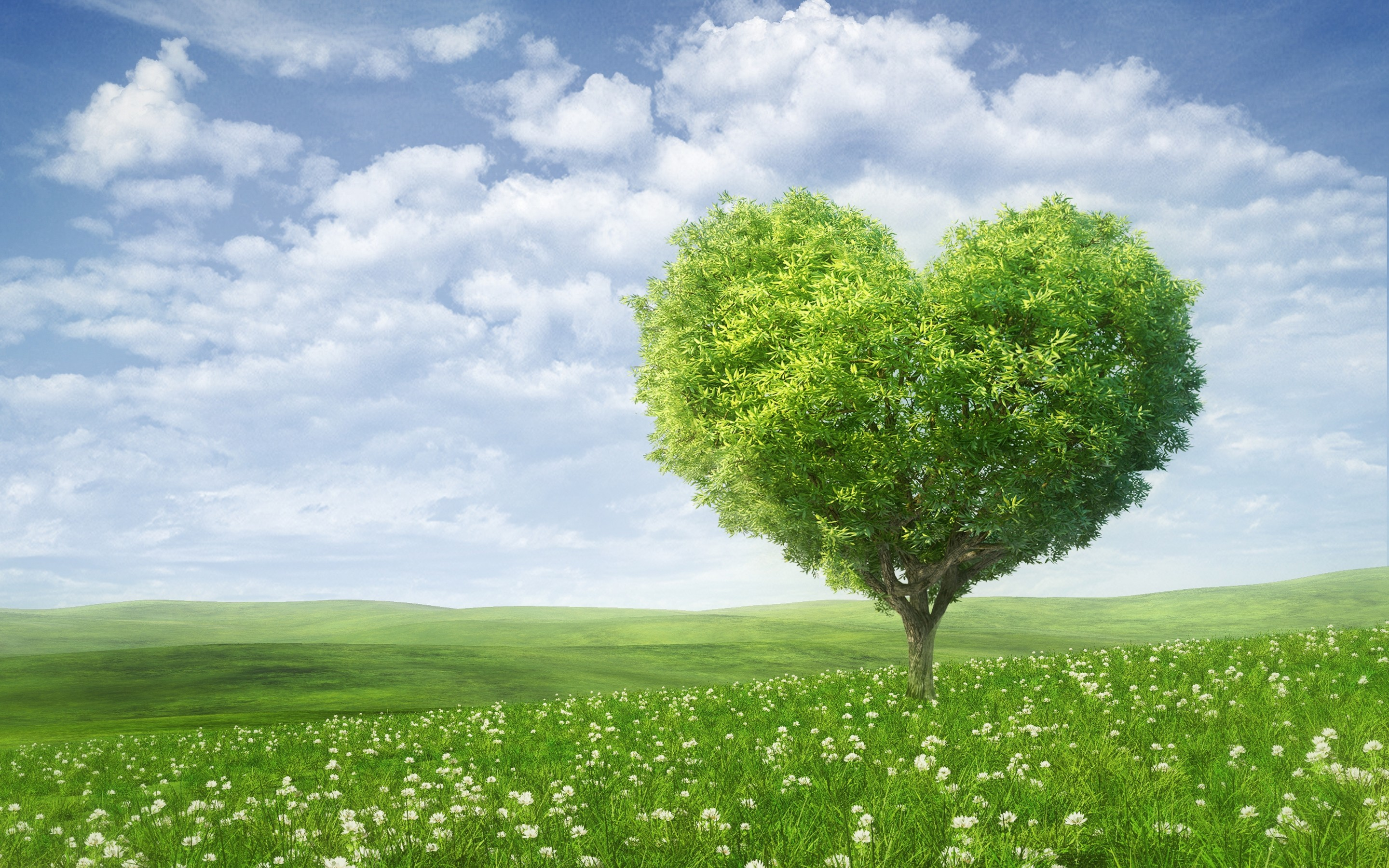 valentine-s-day-love-romance-tree-heart